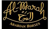 Al-Marah Arabian Horses